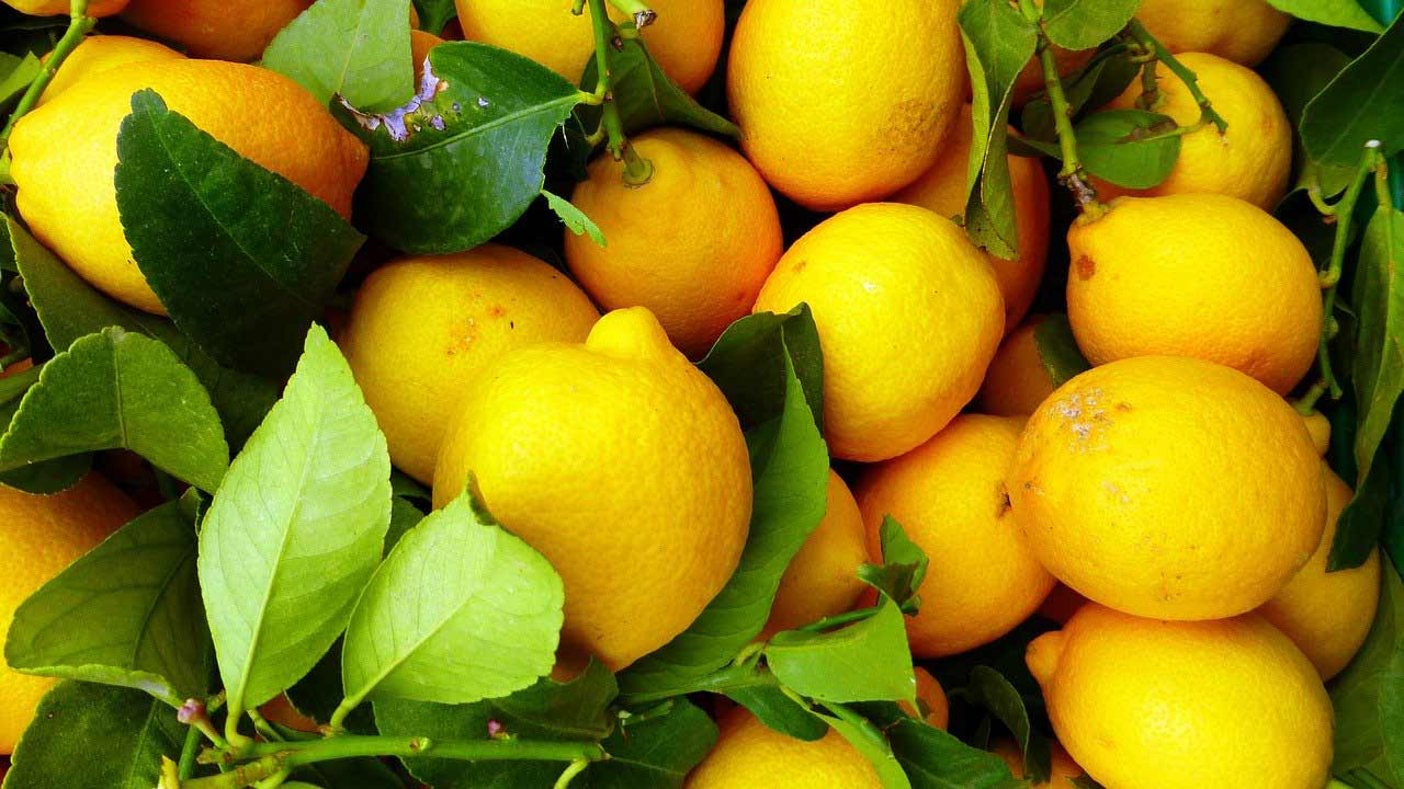 fruit de saison citron