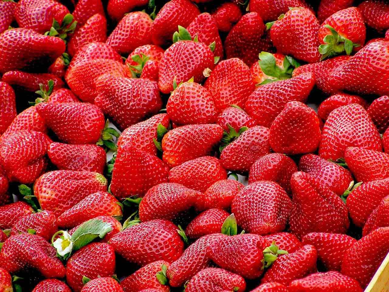 fruit saison fraises