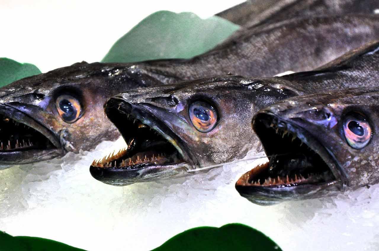 poisson saison calendrier merlu