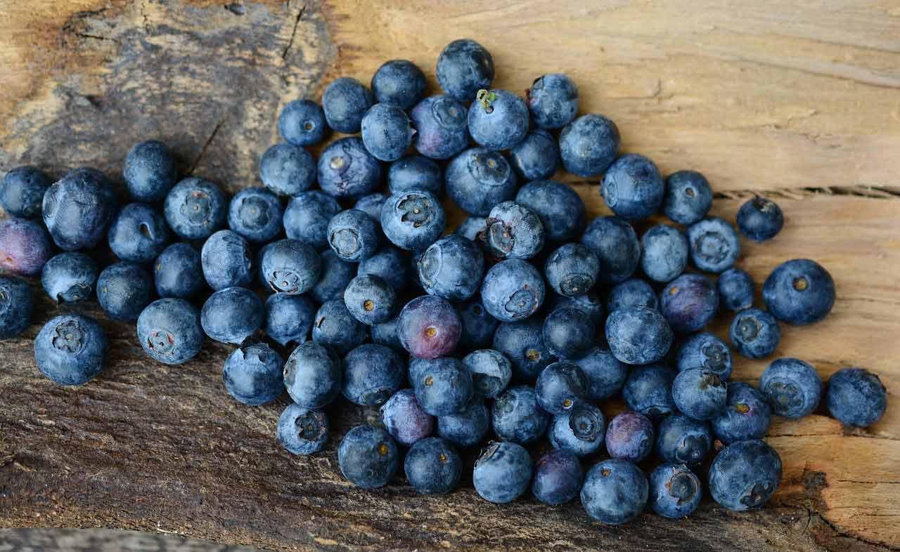 fruit saison myrtille