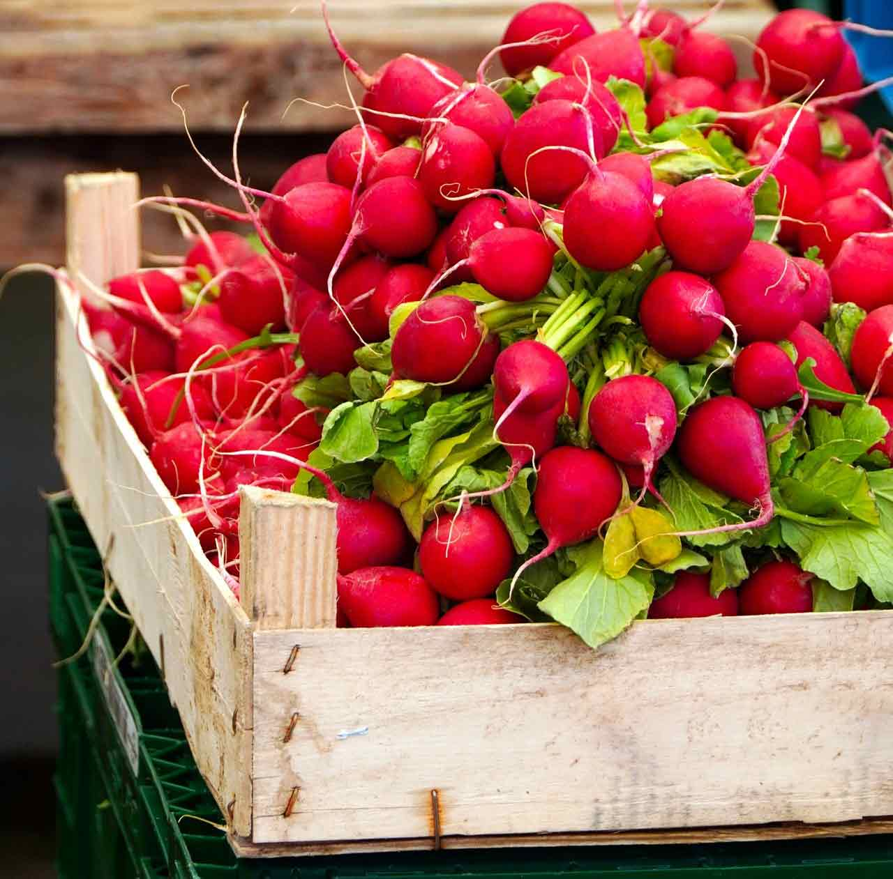 radis légume de saison