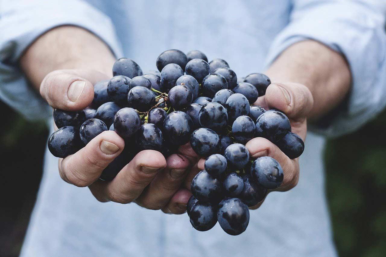 fruit de saison raisin