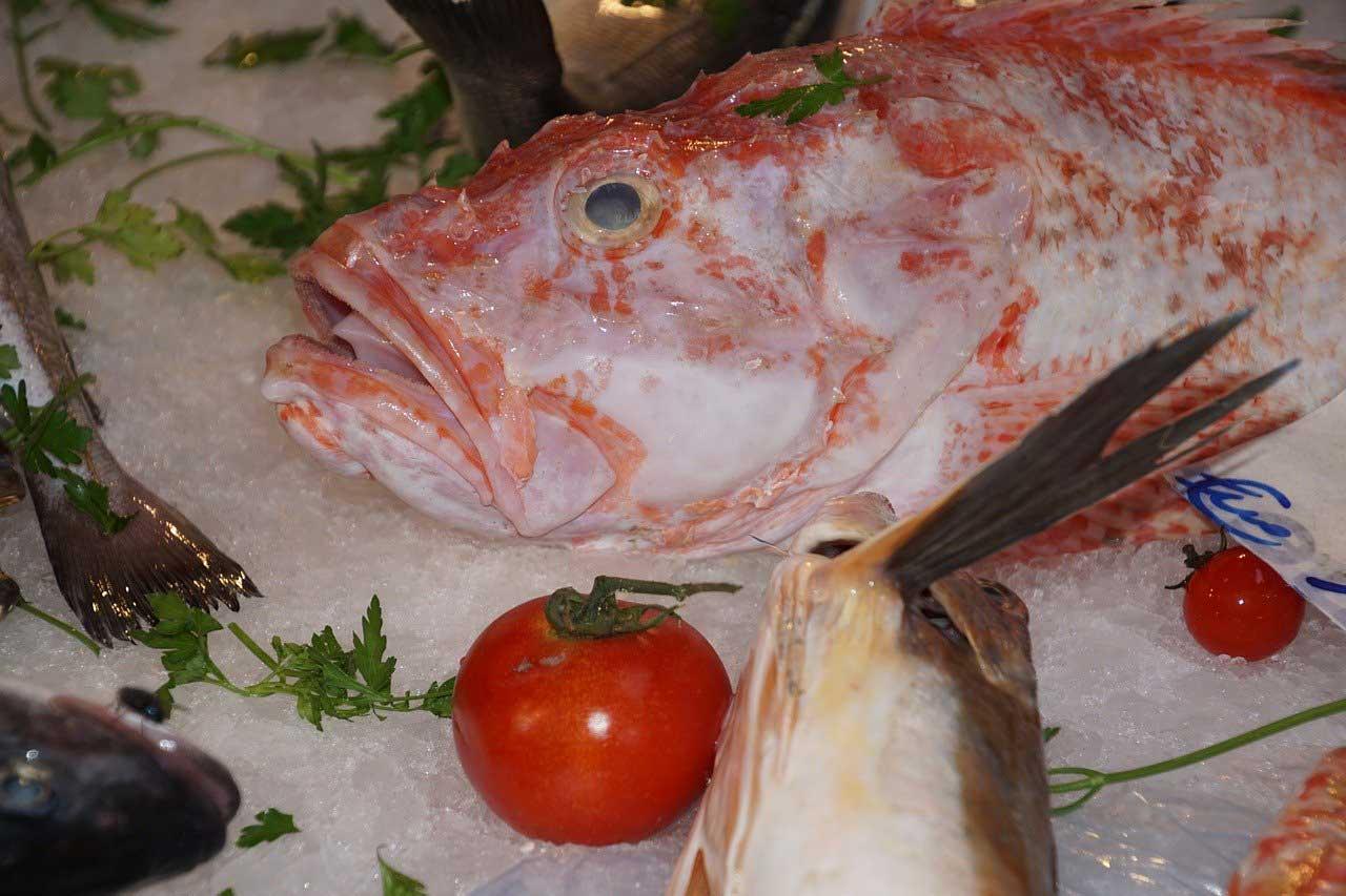 poisson saison rascasse