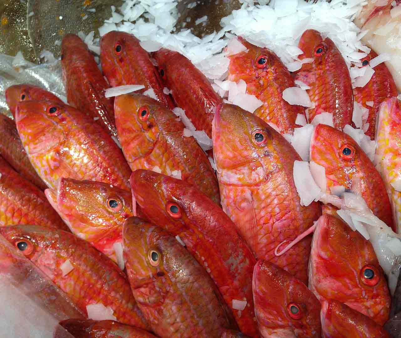 rouget barbet roche poisson saison juillet