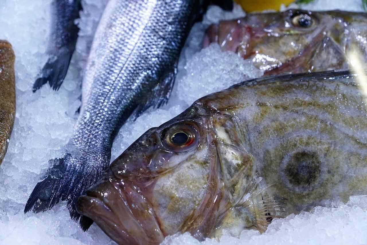 poisson saison saint pierre