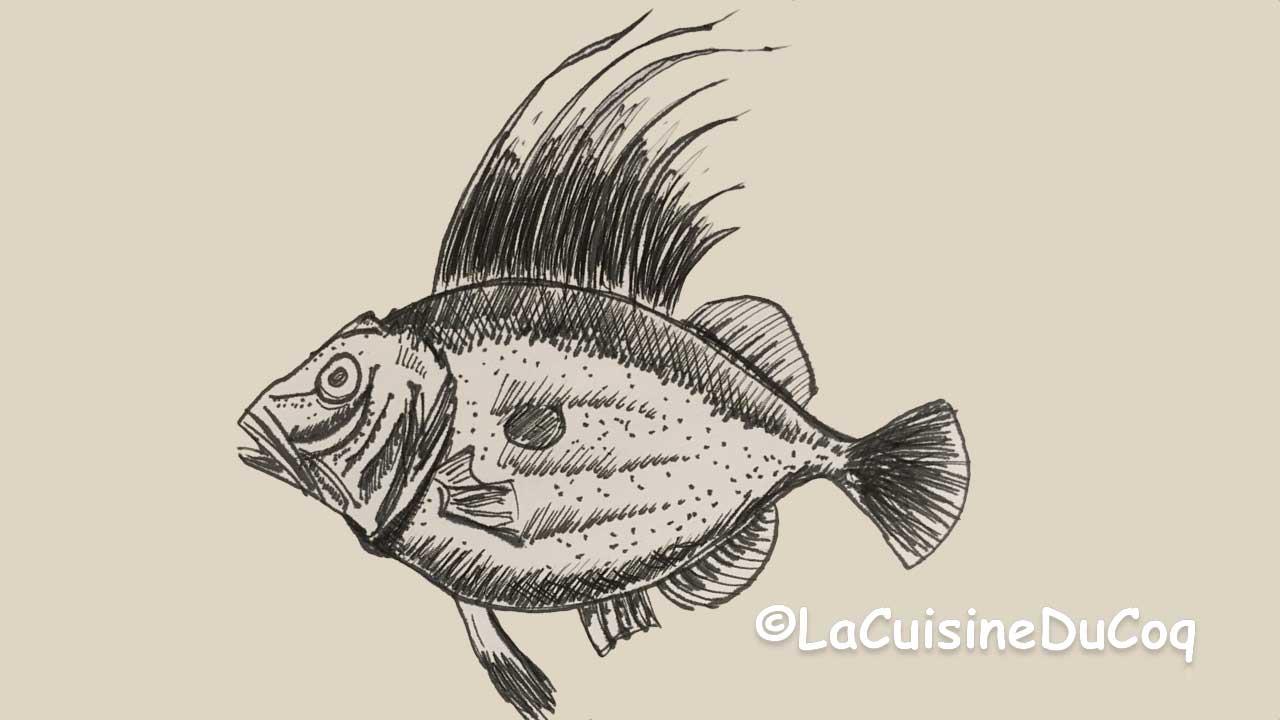 dessin st pierre poisson